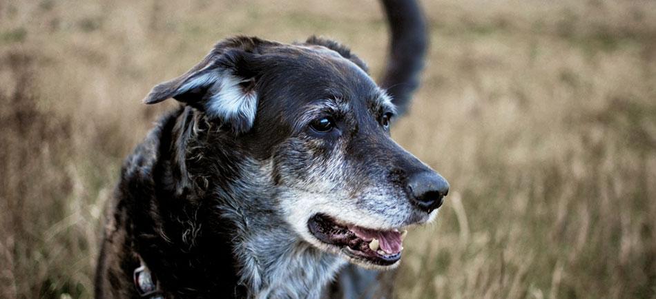 """Falls""""der Beste Freund des Menschen""""auch mal einen schlechten Tag hat!Jetzt Hundehaftpflicht berechnen und vergleichen!"""