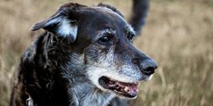 Hundehaftpflicht - Monteverdi Finanz