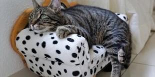 Katzen OP - Monteverdi Finanz