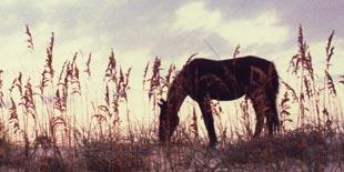 Pferdehaftpflicht - Monteverdi Finanz